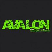 Kortingscode Avalonmagicplants voor 10% korting op alles
