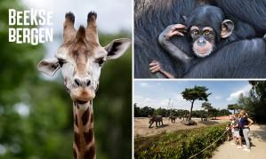 Kaartje Safaripark Beekse Bergen voor €11,50