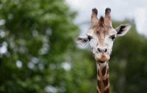 Dagje Safaripark Beekse Bergen voor €14,95