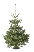 Alle kerstbomen voor €9.95