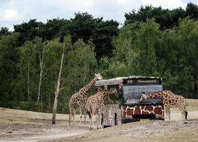 Safaripark Beekse Bergen voor €14,95