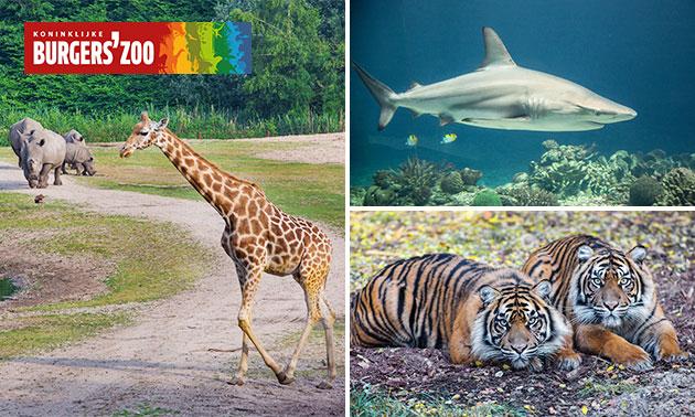 Entree tickets voor Burgers' Zoo voor €16