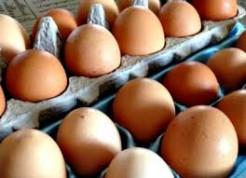 Lidl Eieren 12 Stuks Large voor €0,95