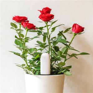 IOT: Xiaomi Mi planten/bloemen sensor voor €10,87