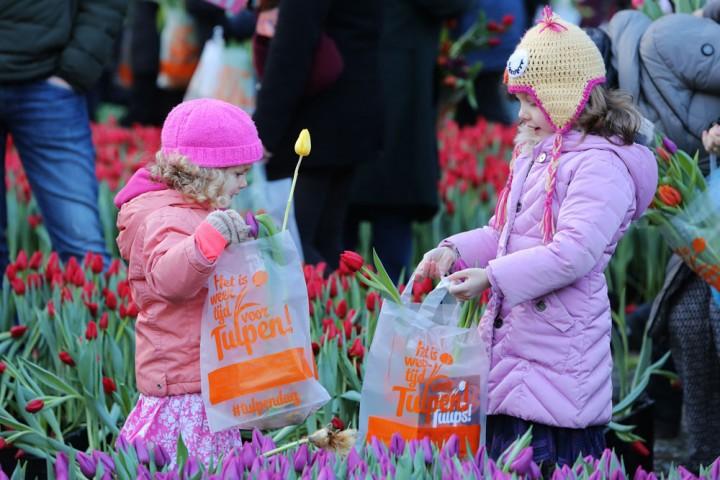 Bosje tulpen plukken op 20 januari 2018 Gratis