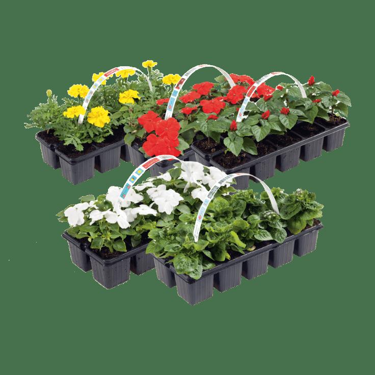 Perkplanten 10 stuks voor €1,19