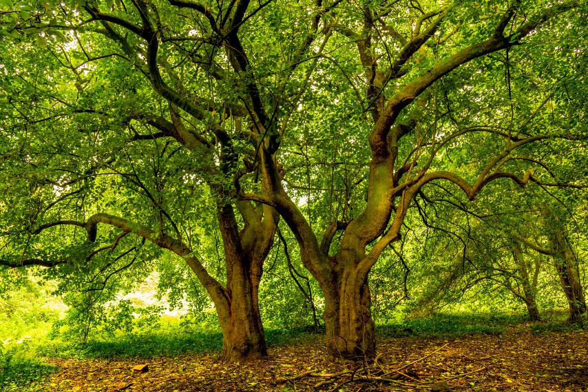 Walking woods
