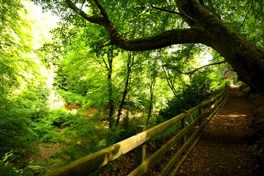 Cairn wood