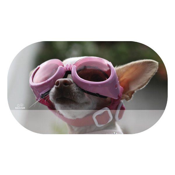 CoolStuff_dog-1_OVAL