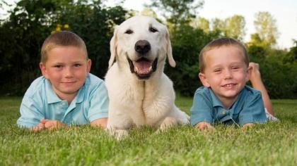 Vurderer du å anskaffe hund?