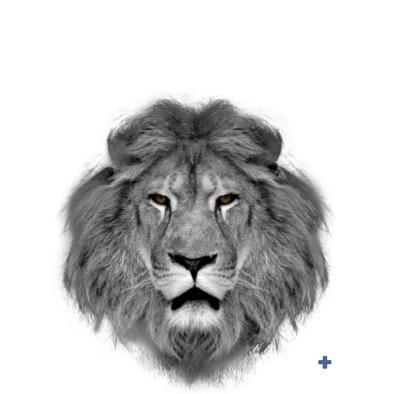 Warrior Lion - F***