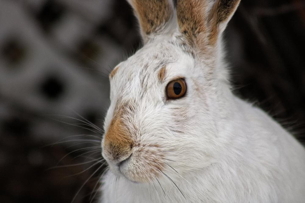 Mr Rabbit>