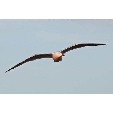 Fly like a Seagull