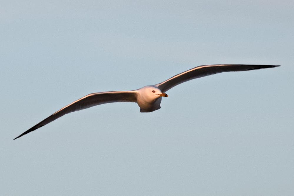 Fly like a Seagull>