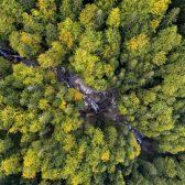 Patagonia duurzaam activisme succes
