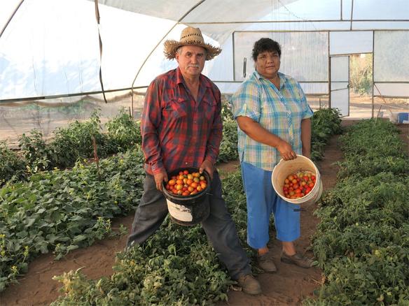 Winnaar MKB Innovatie Top 100 2018 Groasis duurzaamheid milieu growboxx steenbergen mexico boer droogte 6