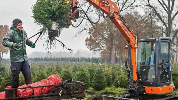 Kerstboom business 002 foto Simon Lenskens