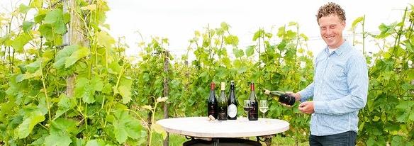 Pieter de boer druiven plukken wijn wijndomein de koen wijngaard nederland wijnboer wijnland diederik beker 2