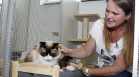 Kattenhotel Nieuw Namen Camile Schelstraete