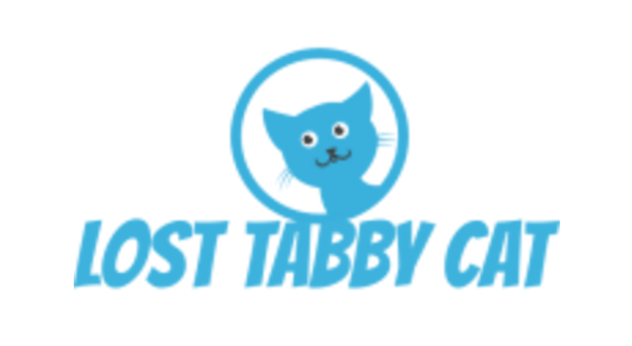 Lost Tabby Cat