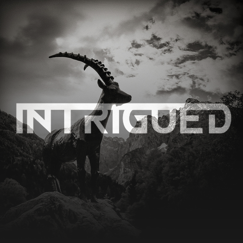 Intrigued (Official) Merchandise