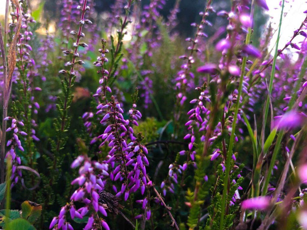 Blog Doctoome | Médecine douce : les bienfaits de la phytothérapie