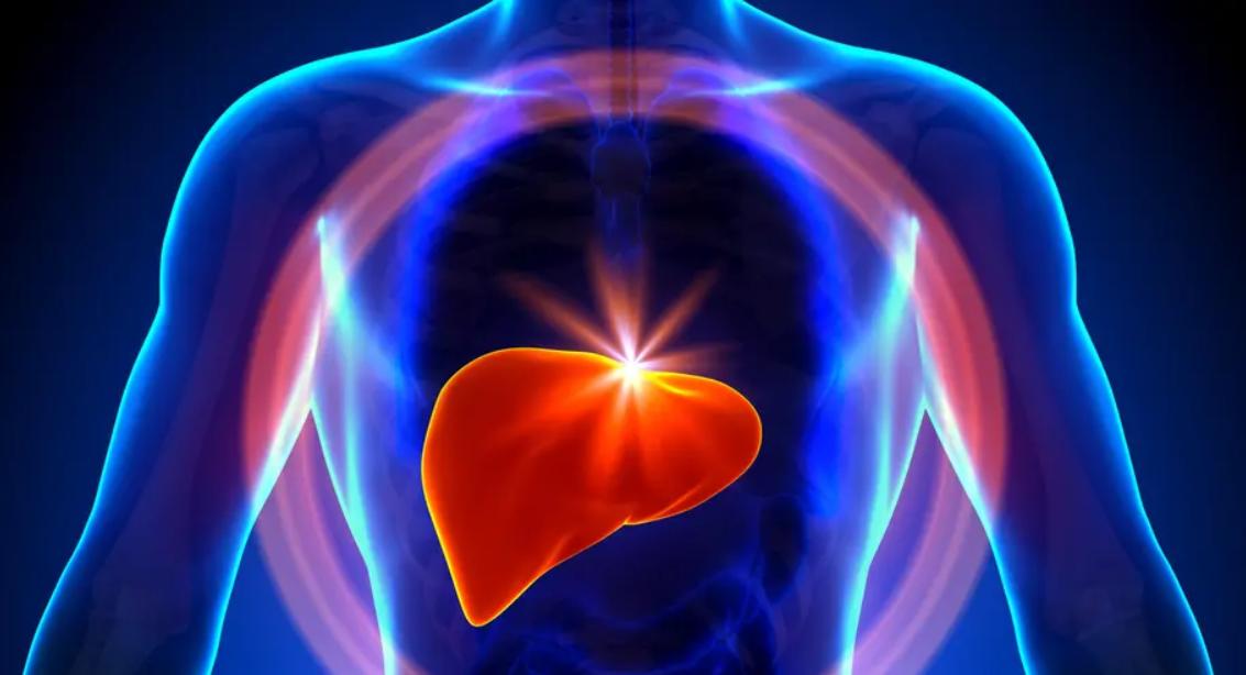 Blog Doctoome |Quelle alimentation pour protéger la santé du foie ?