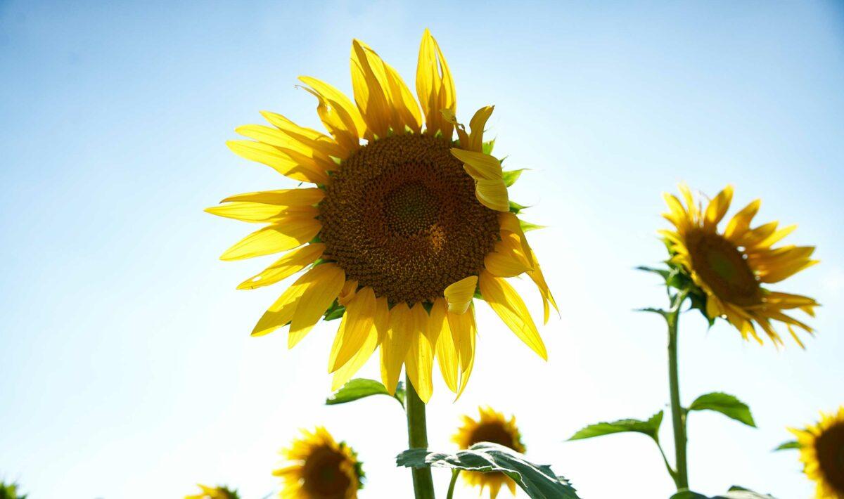 Blog Doctoome | Comment booster sa vitamine D même confiné ?