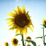Comment booster sa vitamine D en restant chez soi ?