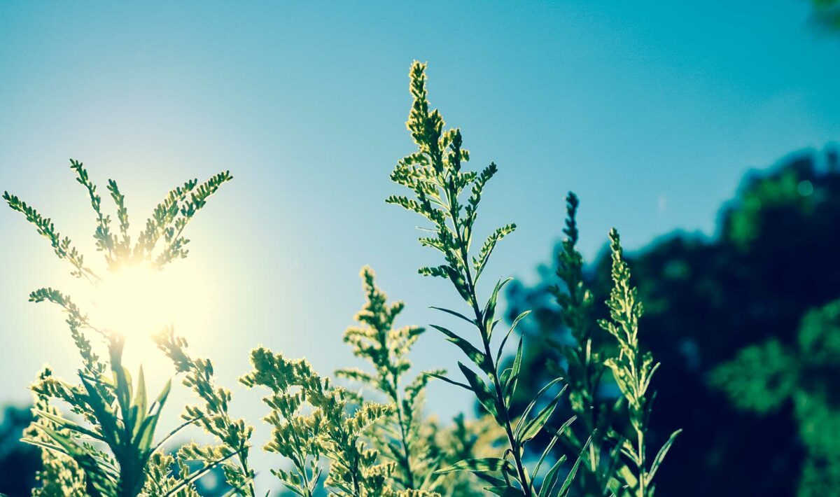 Blog Doctoome | Hausse des températures : une conséquence sur le Covid-19 ?