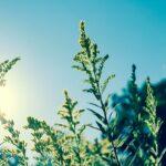 Hausse des températures :  conséquence sur le covid-19 ?