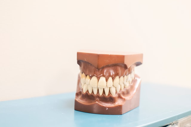 Machoire-dent