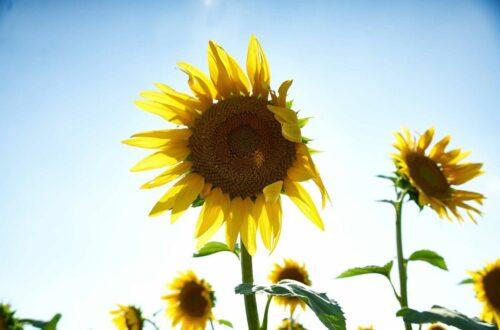 vitamine D soleil booster pendant le confinement