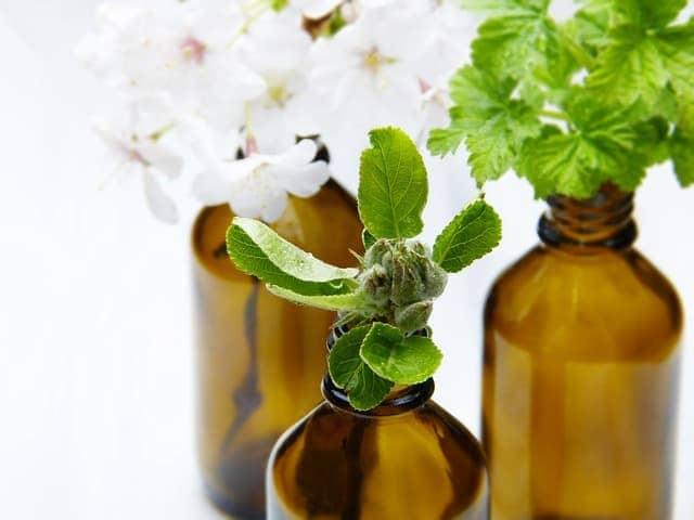 phytothérapie : plantes médecine douce
