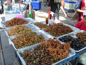 consommation d'insectes(2)