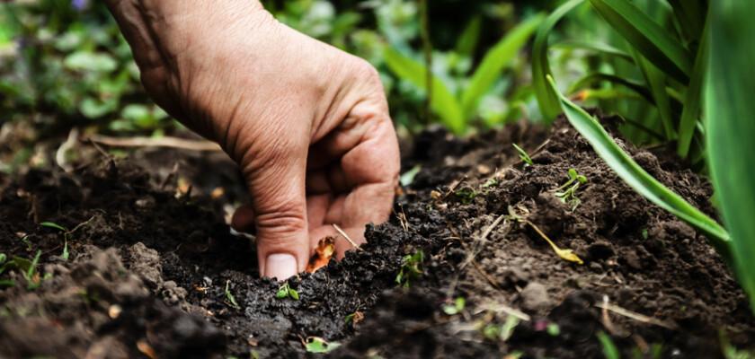 Heat flux hand in soil soil 662080852