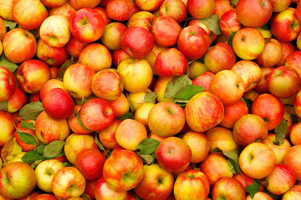 Guba Tour - Apple Festival Tour, October 07, 2019