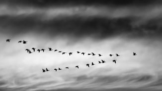 Website Migration Differences explained