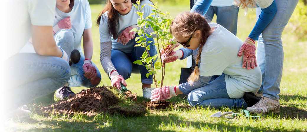 Charities trusts girl planting tree