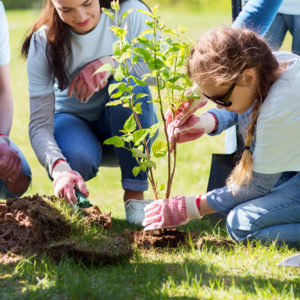 Charities trusts girl planting tree