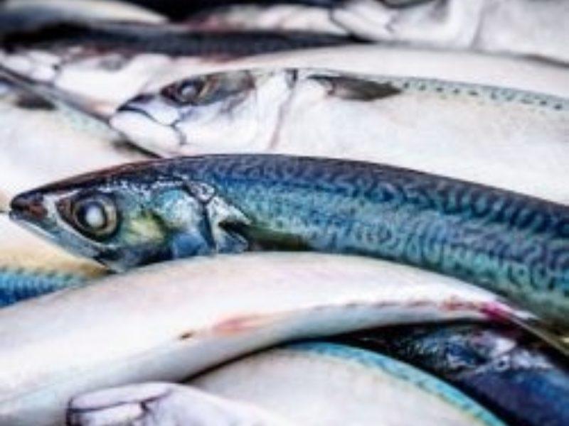 Fish 250 X 250 250X250