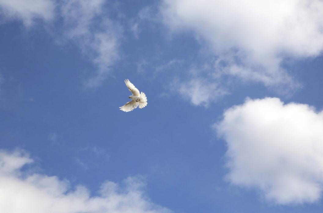 Himmel og due