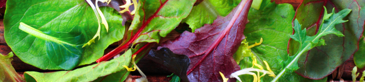 Tinytag temp/RH loggers monitor salads during refrigerated distribution