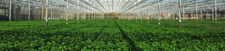 Tinytag temperature data loggers monitor conditions for plants during export