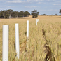 Tinytag Australian grain frost research