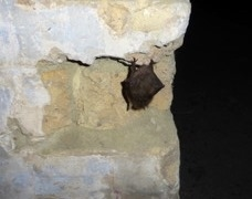 Temperature and RH monitoring Kent Bat Group