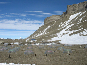 A cliff-face on the right overshadows the experiment site where the conical covers have been set up over the experiment plots.