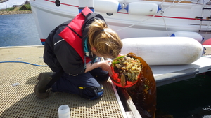 A person kneels down on a deck at a marina and inspects the sea life attached to a buoy.
