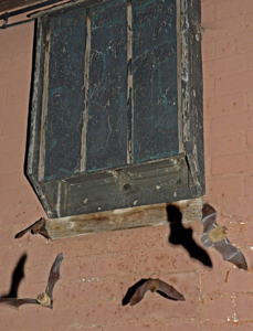 Tinytag data loggers monitor temperature of bat hibernation sites