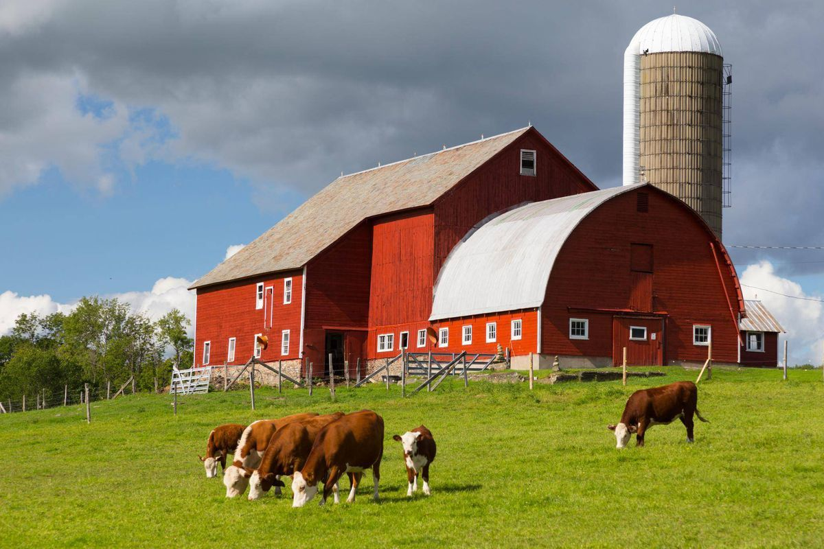 Provide Good Healthcare to Farm Animals-Sustainable Cities